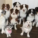 我が家の犬は、小型犬用?中型犬用?それとも大型犬用?