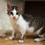 猫を上手に叱るための5つの方法
