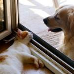 知っていますか?ペットのノミって人間にも寄生するんです。