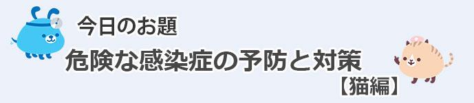 PK_BLOG.jpg_neko
