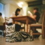 猫をわが子として育てられますか?猫を飼うときの心得。
