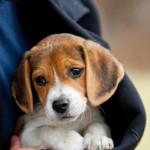 犬の幸せはアナタ次第!知っておきたいチェックポイントとは?