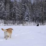 行きたくないのは、飼い主だけ?犬の冬のお散歩。