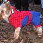 犬猫に洋服を着せてる飼い主さん必見!デメリットは知っていますか?