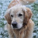 この時期ペットだって痛いんです!冬に多い関節痛。