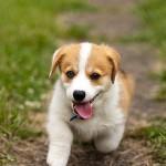 【保存版】知っておきたい犬種別かかりやすい病気リスト!(前編)