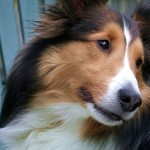ペットのフィラリア予防 注意すべき3つのコト!