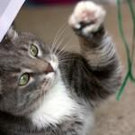 猫の身体の人気スポットは、かわいい『肉球』!そのお手入れ方法。