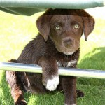 かわいいプニプニ!犬の「肉球」について学ぼう!