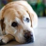 安心できない犬猫の『爪の病気と怪我』