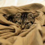 猫だって性差がでるんです!性別で気をつけるべき病気リスト。