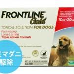 frontlinegold_mediumdog__65260_zoom
