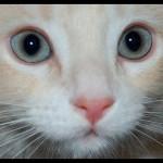 意外に多いペットの目の病気!お薬の特徴まとめ!