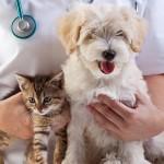 今さら聞けない。動物病院のチェックポイント!