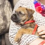 新発見‼︎犬と飼い主の関係はヒトの母子の関係に似ている⁉︎