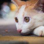 もっと仲良くなりたい!ネコの気持ち研究道場!