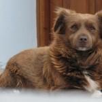 中年犬・高齢犬のためのペット保険利用法とは?