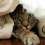 飼い主が知っておきたい秋冬の猫の病気。気をつけるべき4つのこと。
