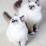栄養障害!?ぽっちゃり猫ちゃんの肥満対策とダイエット方法