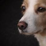 散歩はすぐできる?病中や手術後の犬のお散歩や運動について。