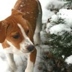 万病になる前に治したい!犬の風邪。