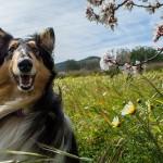 この時期だから気にしたい、「ペットの花粉症」