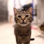 猫が病院にかかる時のストレスを減らすには!?