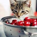 猫の犬フィラリア症について