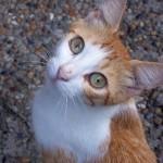 冬になると多くなる猫の泌尿器系の病気(概要編)
