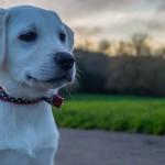 冬に悪化する犬猫の関節炎と犬の椎間板ヘルニア