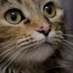 冬になると多くなる猫の泌尿器系の病気(治療・予防編)