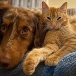 特に冬に気を付けたい!犬猫の関節炎の予防と自宅でできるケア