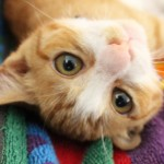 家でできる猫の健康チェック!病気のサインを見逃さない為のポイントとは?