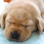 家でできる犬の健康チェック!病気のサインを見逃さない為のポイントとは?