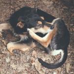 犬猫のノミの原因は何?感染経路を理解してノミ徹底対策!