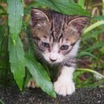 猫は皮膚炎と肥満に注意!梅雨に気をつけたい、3つの病気とその対策とは?