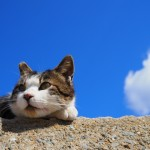 猫の熱中症について
