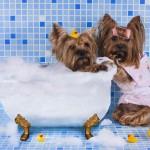 ペット(犬猫)のシャンプーの必要性とおすすめのシャンプーは?