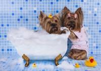 dog-bathing-funny