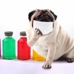 犬から人へのSFTS感染確認!犬猫のマダニ対策を考えよう!