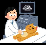 獣医さんが教える!!高齢猫が注意すべき病気