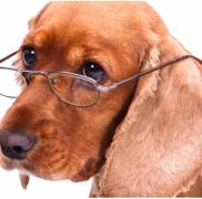 獣医さんが教える!!高齢犬が注意すべき病気