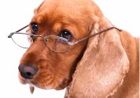 elderly-dogs3